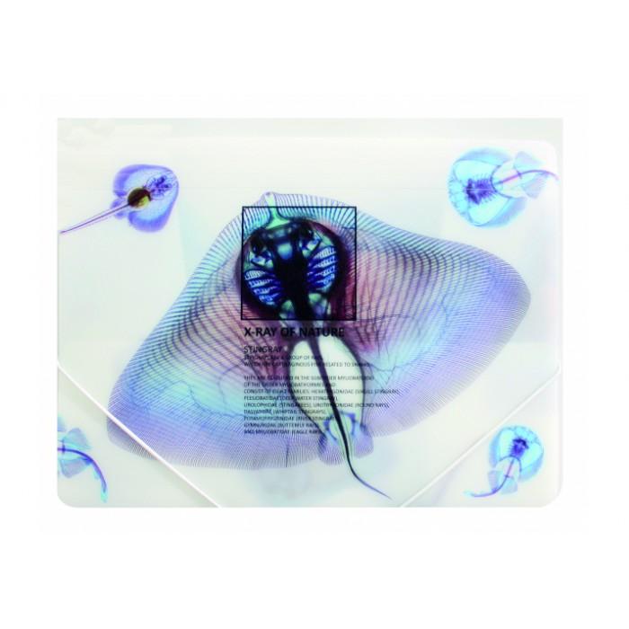 Папка на гумках А4 Optima X-Ray (асорті)